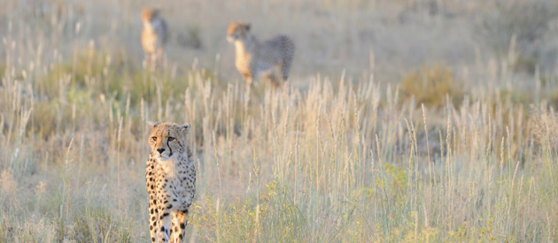 Explore the Beauty of Botswana Safari