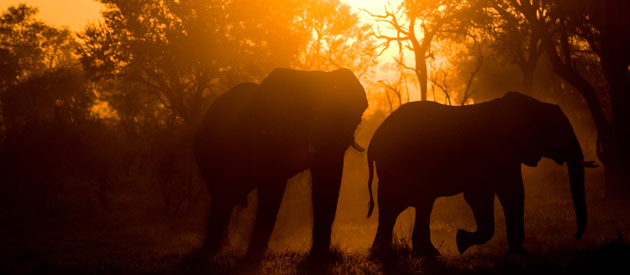 Botswana Introduces Tourism Levy