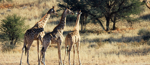 AFRICA'S BEST ADVENTURES - Custom African Safari Tours