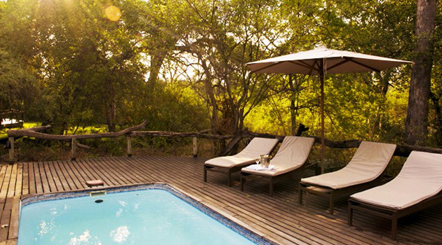 Royal Tree Lodge, four Star, Private Game Reserve, Luxury Chalets, Glamorous Tented Camping, Glamping, Accommodation, Activities Maun, Ngamiland, Botswana, Birding, Game Drives, Game Walks, Horseback Safaris, Scenic Flights