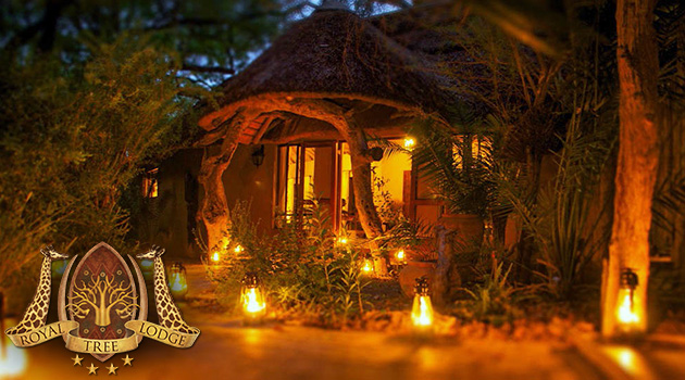 ROYAL TREE LODGE, MAUN | NGAMILAND